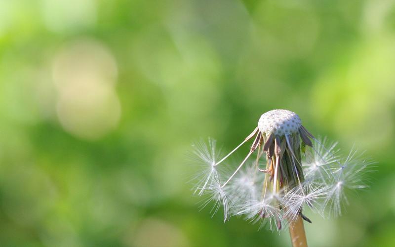 Verlies en rouwbegeleiding